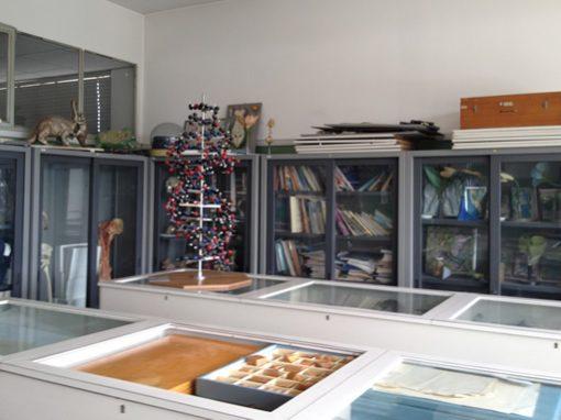 Istituto Pierluigi Nervi – Novara